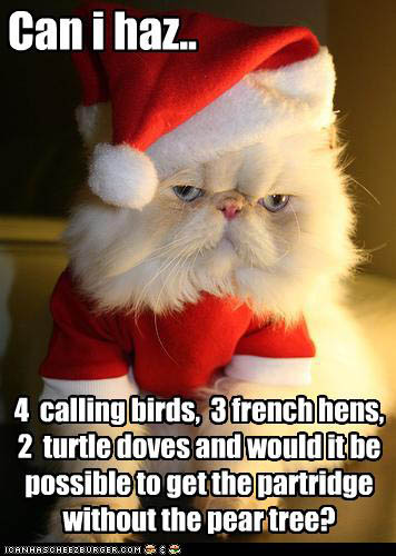 funny-pictures-cat-asks-for-birds