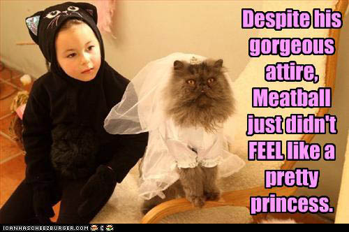 funny-pictures-cat-hates-outfit