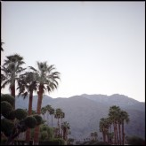 Palm_Springs_Indie_Film_Estate_Wedding_rad_and_In_Love-89