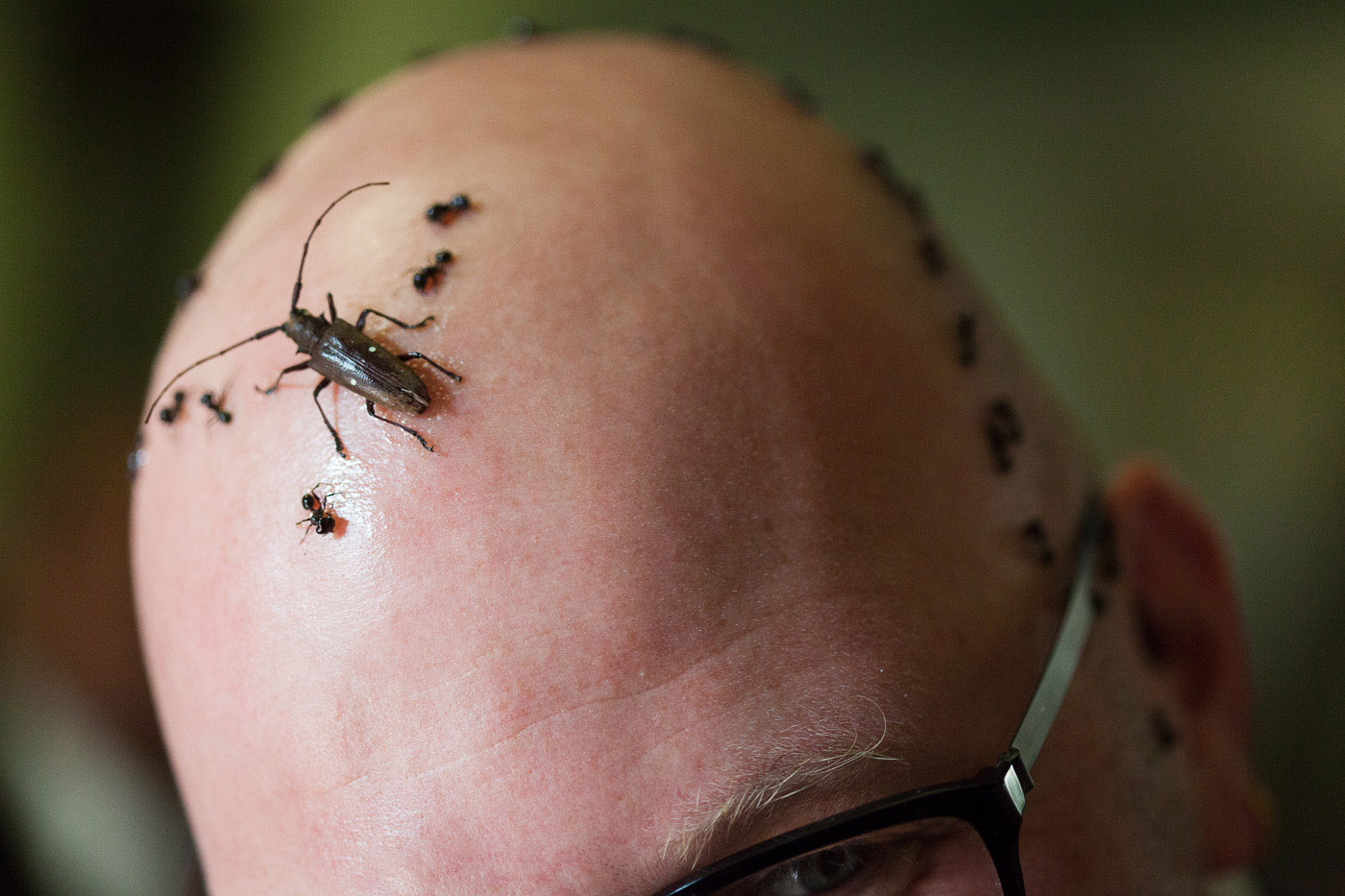 Insect and Creepy Crawly Themed Wedding Tessa Matthew Rock n