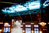 Music_nerd_cat_lover_Chicago_Wedding_by_Sprung_Photo146