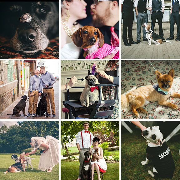 12 reasons your dog needs to be at your wedding