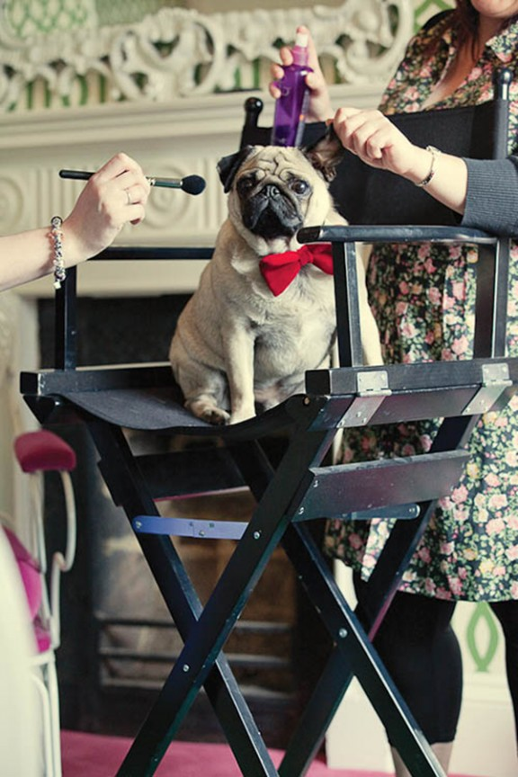 pug beach seaside wedding