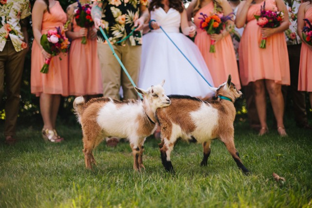 Hawaii tiki goat wedding (40)