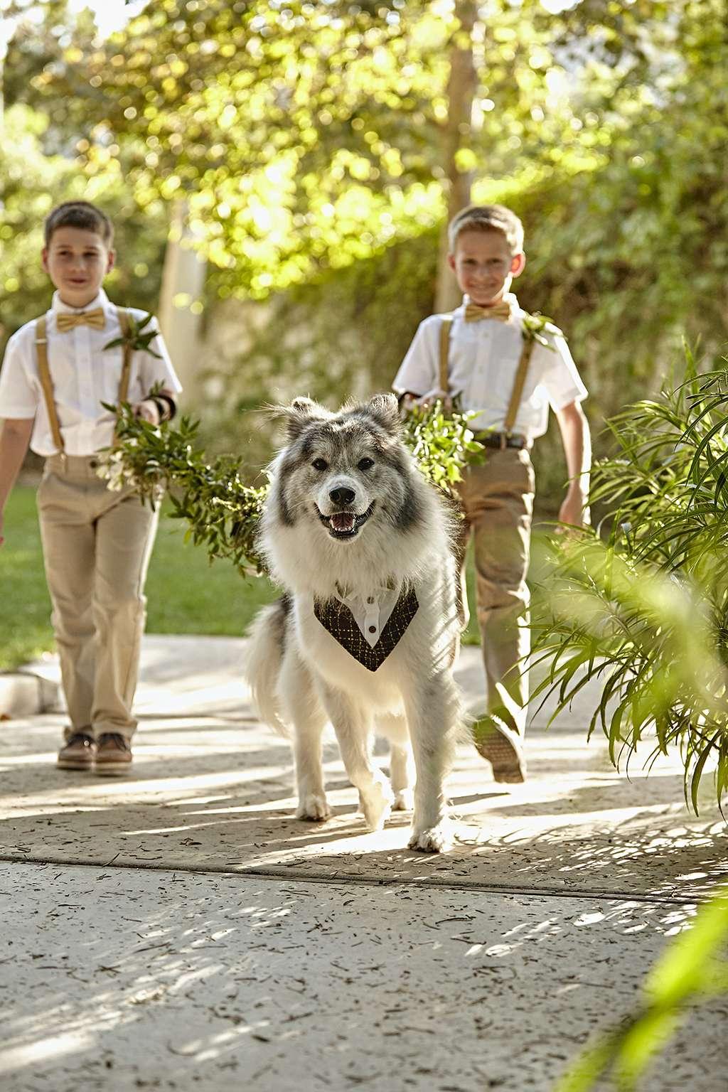 Dog Ring Bearer Adventure Succulent Wedding 33: Wedding Ring Barrier Dogs At Websimilar.org